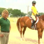 Where Can You Find Horse Videos to Watch Online?
